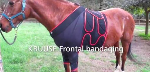 KRUUSE | Equine frontal bandaging