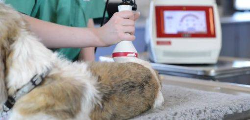 KRUUSE | Class IV Laser Therapy