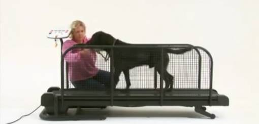 KRUUSE | Fit Fur Life Treadmill - Introduce Dog